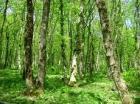 Площадь городских лесов увеличится на полторы тысячи гектар
