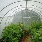 Что может обеспечить высокий и качественный урожай?