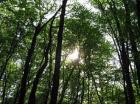 На Ставрополье сотрудники полиции спасли заблудившегося в лесу молодого человека