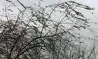 Краевое МЧС предупреждает ставропольцев о сильном ветре