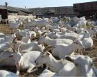 Меры по профилактике болезней животных обсудили в краевой Думе