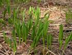 На Ставрополье инспекторы Минприроды вышли на защиту редкого растения