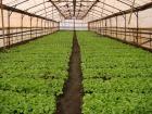 На Ставрополье обсудили эффективные системы земледелия