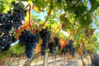 На Ставрополье планируют построить логистический центр для хранения винограда