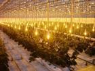 В Ставрополе планируют создать тепличный комплекс для выращивания овощей