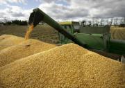 Почти четыре миллиона тонн зерна собрали в Ставропольском крае