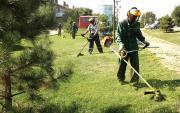 ВПятигорске стартует четвертая летняя городская акция «Стоп-амброзия!»