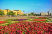 Администрация Ставрополя приглашает поучаствовать в конкурсе городских цветников