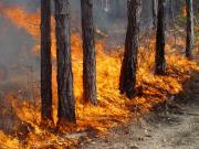 В некоторых районах Ставрополья 30-31 июля ожидается чрезвычайная пожароопасность