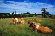 Минсельхоз края разработал концепцию развития молочного скотоводства