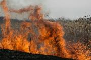 В некоторых районах Ставрополья 31 июля ожидается высокая пожароопасность