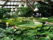 Пострадавшему отграда Ботаническому саду выделили деньги наремонт
