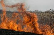 На Ставрополье 11 августа прогнозируются пожароопасность, гроза, порывистый ветер