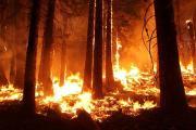 Внекоторых районах Ставрополья 12-14 августа прогнозируется чрезвычайная пожароопасность
