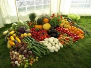 НаСтаврополье обучают начинающих овощеводов